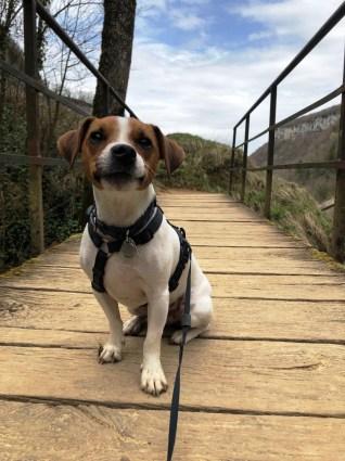Casacdes Tufs Hérisson chien (12)
