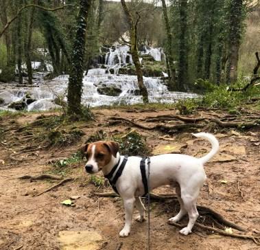 Casacdes Tufs Hérisson chien (17)