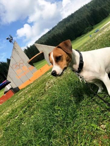 Igman chien (8)
