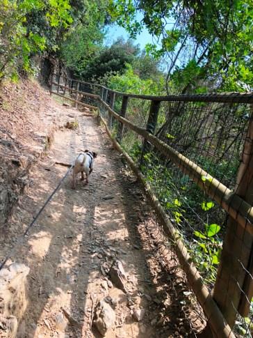 chien cinque terre4