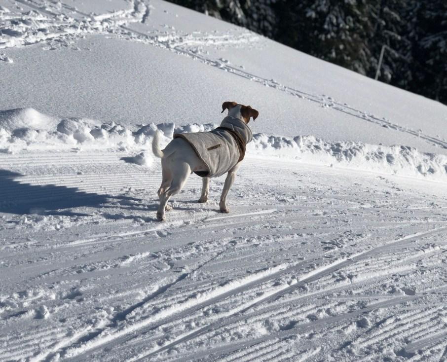 protéger ton chien en hiver