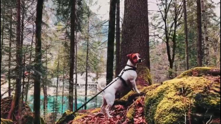 Blausee chien (1)