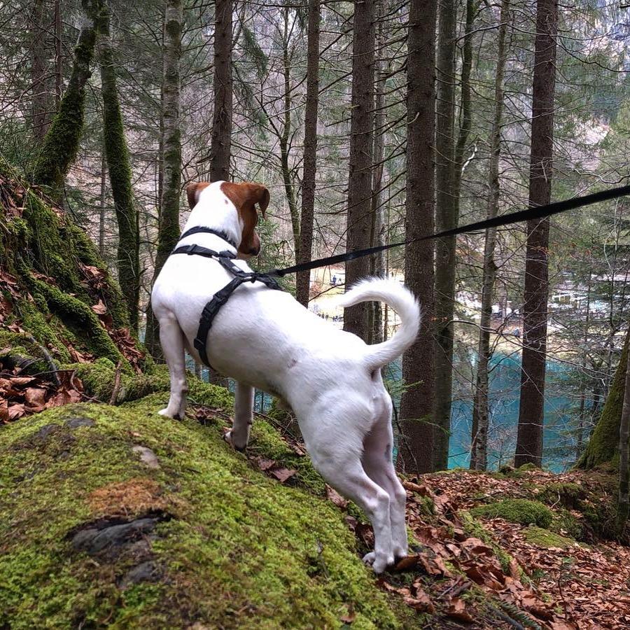 Blausee chien (2)