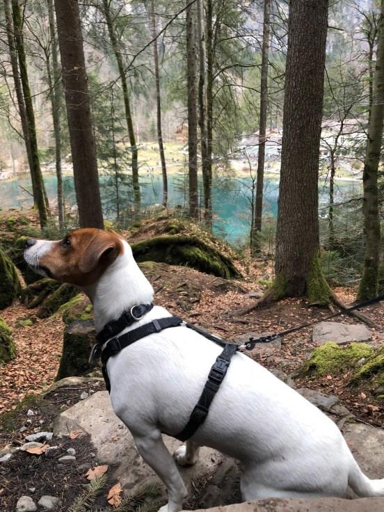 Blausee chien (3)