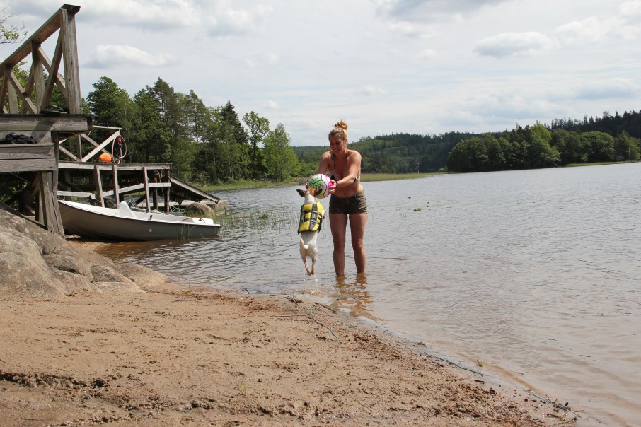 Suede chien lac