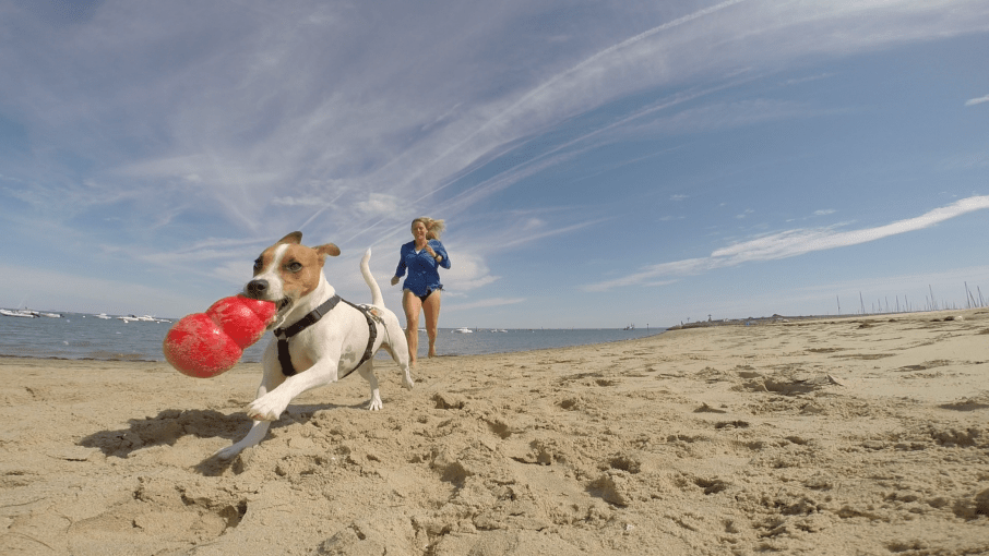 girl travel with dog single