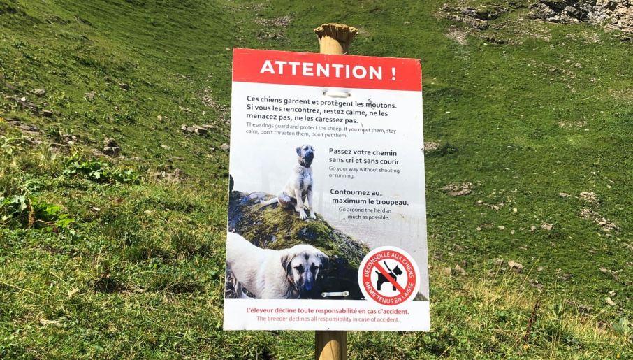 patous chien alpes suisses