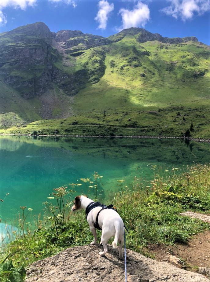 lac de lioson chien