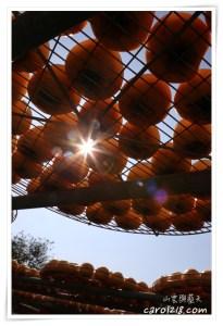 網站近期文章:[苗栗公館]柿之鄉~秋天專屬曬柿餅美景,品嚐美味柿餅