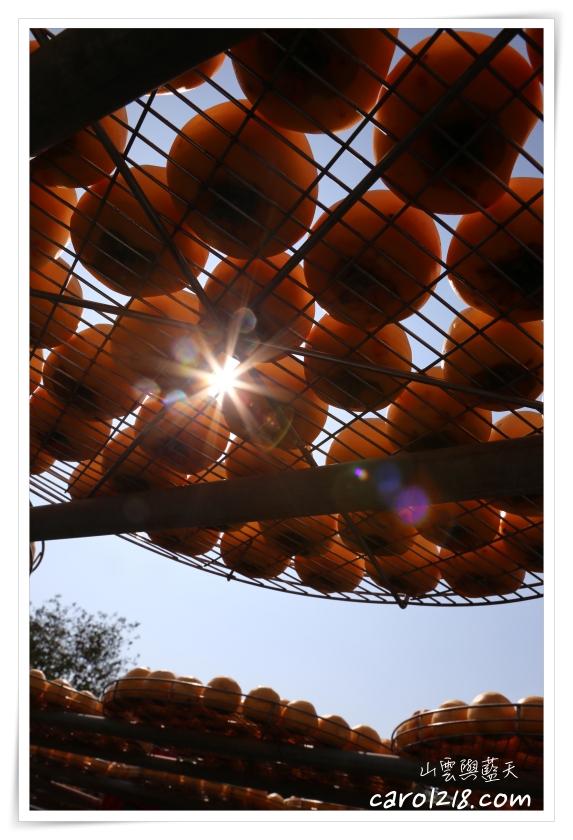 [苗栗公館]柿之鄉~秋天專屬曬柿餅美景,品嚐美味柿餅