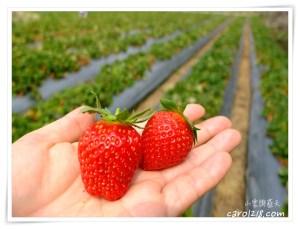 網站近期文章:[苗栗大湖]妍美草莓園~馬拉邦山無毒草莓、品質價格俱優