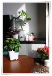 網站近期文章:森林有塊田~室內盆栽龜背芋,自動澆水花盆超適合懶人
