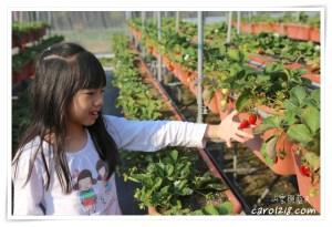 網站近期文章:[苗栗]怡欣高架草莓園~滋味濃郁甜美媲美豐香的戀香草莓