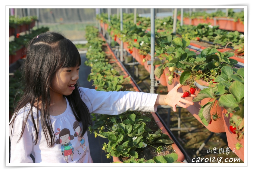 [苗栗]怡欣高架草莓園~滋味濃郁甜美媲美豐香的戀香草莓