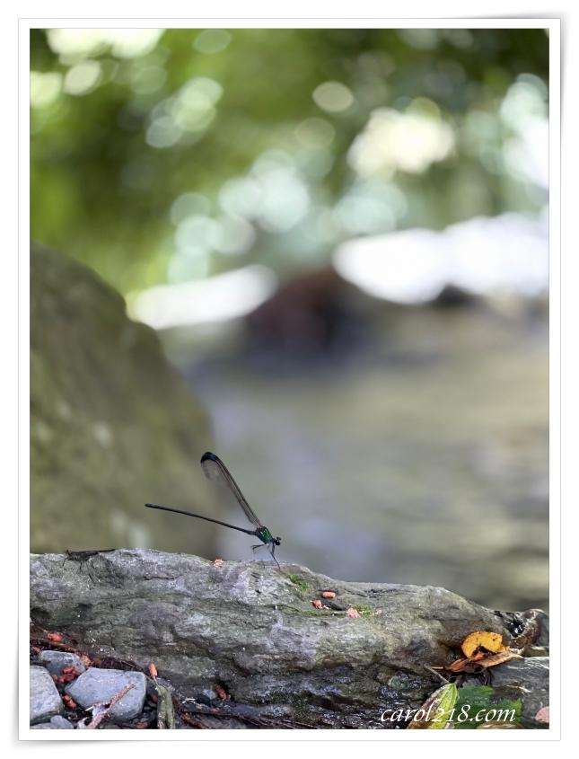 中部戲水,中部戲水景點,中部野溪,南投埔里,埔里,埔里瀑布,彩蝶瀑布,親子戲水