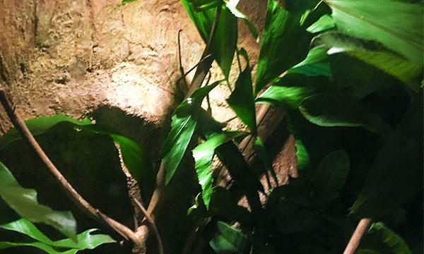 夜間動物園昆蟲