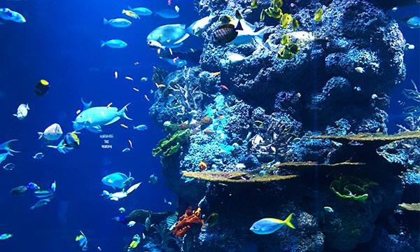 S.E.A.海洋館珊瑚