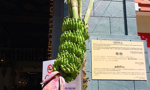 馬里安曼廟前的香蕉