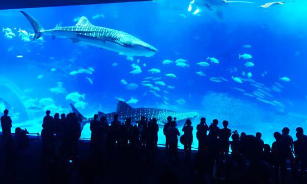 【沖繩景點】沖繩美麗海水族館|門票、交通、設施攻略