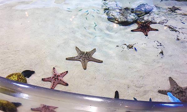 海星觸摸池