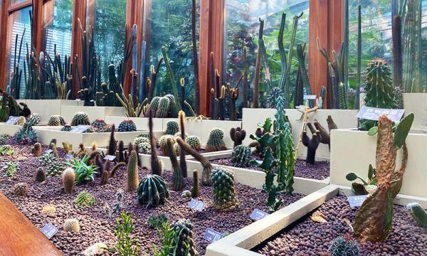典藏植物園裡的小仙人掌