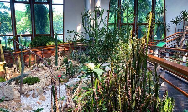 典藏植物園 多肉植物區