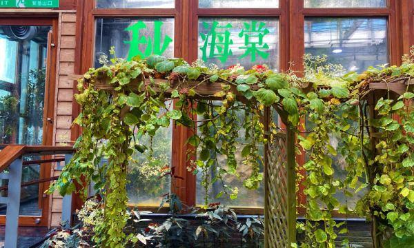 典藏植物園 秋海棠