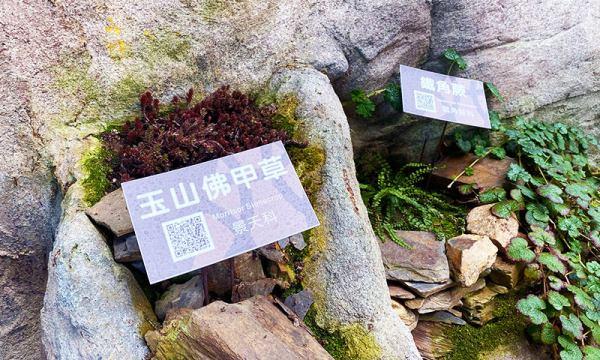 高山草本植物