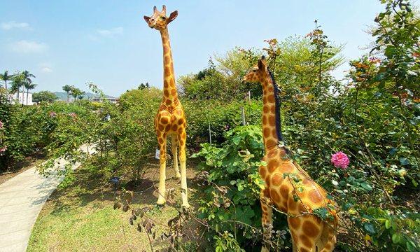 臺北玫瑰園內有長頸鹿裝飾