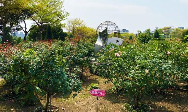 臺北玫瑰園 花海區