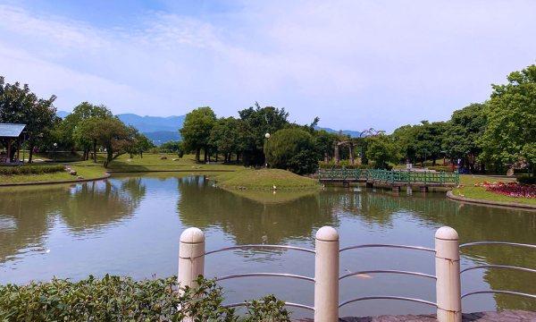 分洪堰風景區的池塘