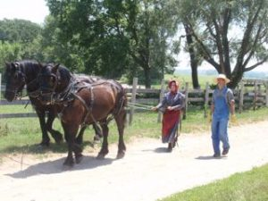 Horsepower came from real horses in 1900.