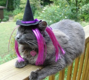 cats-dogs-halloween-costumes-10262011-13