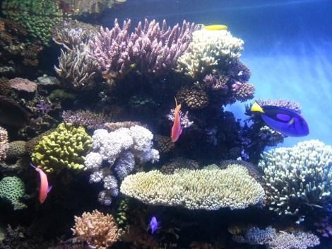 colorfish gd