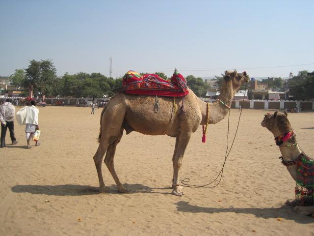 camel stadium