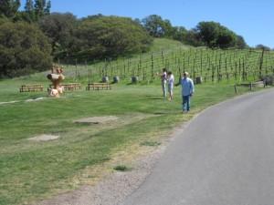 visit-California-wine-country
