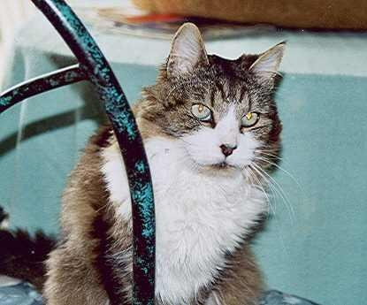 Sweet Tyler, who died in 2007. RIP