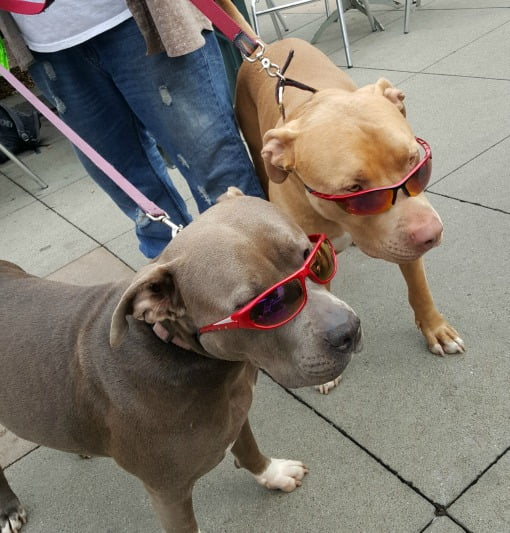 pits in shades