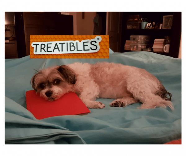 cannabis-dog-treats