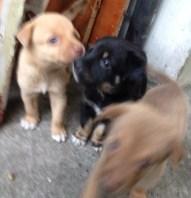 dogpic3