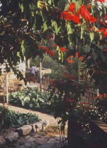 Garden with poinsettias