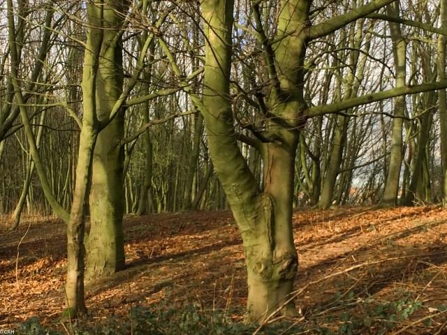 Trees Astbury Mere (1 of 1)
