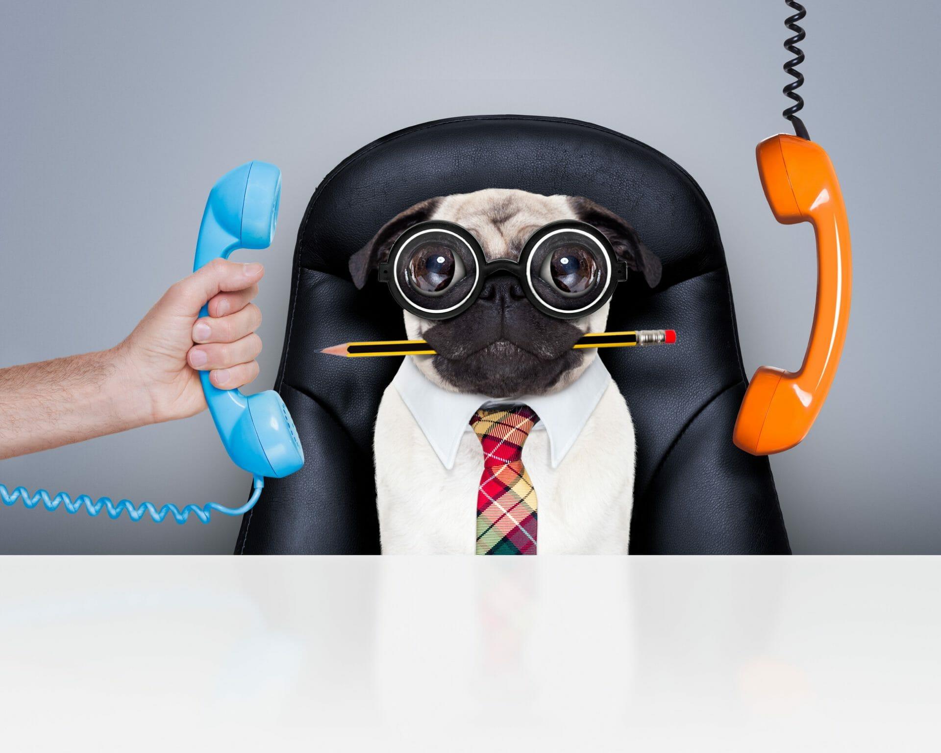 dog phone funny