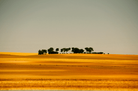Oro parece. Castilla.