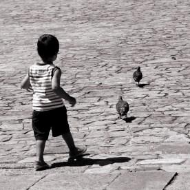 Ugly duckling. Plaza del Obradoiro, Santiago de Compostela.