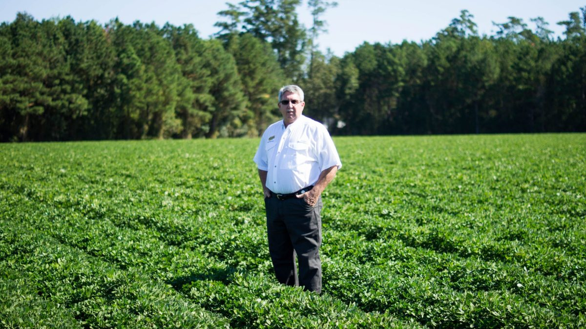 Dan Ward stands in the middle of his peanut farm in Bladen County, NC. Photo courtesy of Dan Ward.