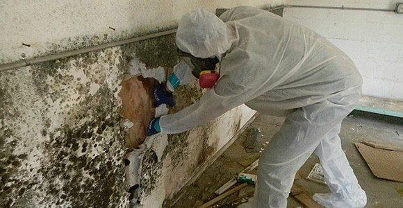 Commercial Mold Remediation in Raleigh NC