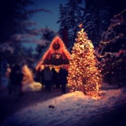 A merry Christmas tree