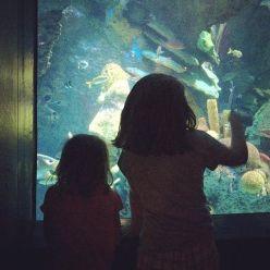 Aquarium_fun