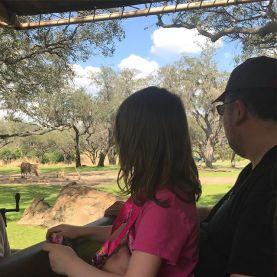 Super impressed with the safari.